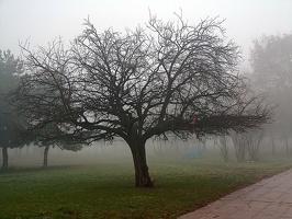 fog 09 as