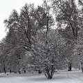 freedom garden pano winter 01