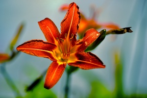 lilium.2020.01 as