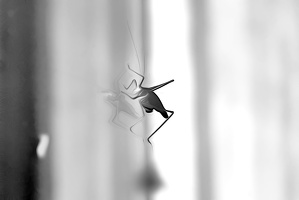 grasshopper 2008.02 as dream bw